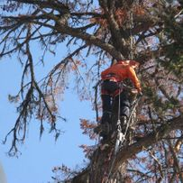 Tree Removal & Total Cleanup