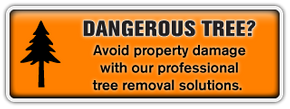 Dangerous Tree? | Avoid property damage with our professional tree removal solutions.