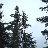 Residential Treetopping & Cleanup
